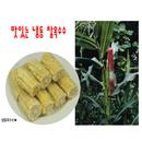 냉동찰옥수수  (100개입/box, 개당50~60g절단, 간식,후식용)
