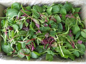 [친환경브랜드 누에와나비]유기농어린잎(베이비)채소(500g)