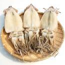 동해안 반건조 오징어 중 10마리(900g내외)