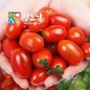 ★무료배송★탱글탱글한 대추방울토마토 2kg(소과)