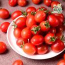 대추 방울 토마토 2kg 3번과