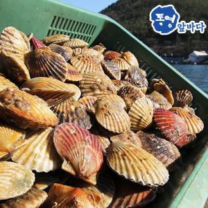 [통영앞바다]통영 가리비 2kg/40마리 내외