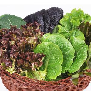 유기농 모듬 쌈채소★로메인,적상추,케일,청상추 특가