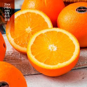 [보섭이네푸드] 퓨어스펙 블랙라벨 오렌지 중소과 2.4kg내외(14~16과)