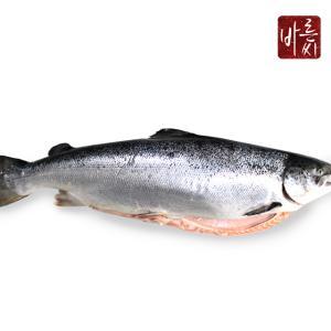 바른씨 노르웨이 연어 통한마리 6.5kg