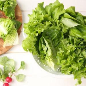 [청미채] 흙이 묻지 않은 프리미엄 무농약 샐러드 400g (버터헤드,카이피라,이자벨,이자트릭스 각 100g 내외)