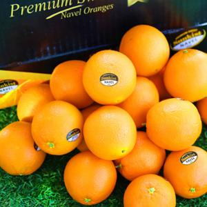 [썬키스트] 블랙라벨 오렌지