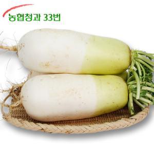 [농협청과33번] 햇무 7kg 내외 (3-5개)
