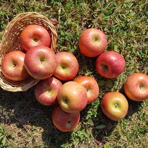 흠과,사과,요까사과,경북사과,안동사과,제철사과,사과주스,사과칩,주스사과,가정용사과