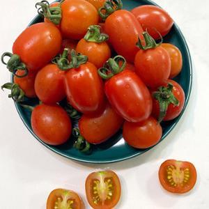 토마토,방울토마토,대추방울토마토,스테비아토마토,대저토마토,완숙토마토,흑토마토