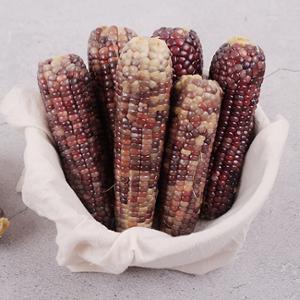 21년 곡성 옥과농협 삶은 흑찰옥수수 특품7팩(냉동)