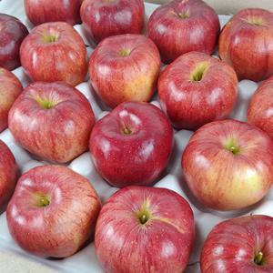 부사사과,햇사과,안동사과,경북사과,제철사과,맛있는사과,알이큰사과