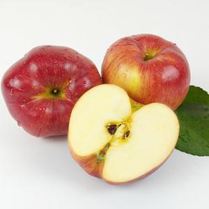 부사사과,햇사과,안동사과,경북사과,제철사과,사과주스,사과칩,주스사과,아침식사대용,간식과일,가정용사과
